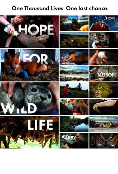 TV ratings for Hope For Wildlife in Turkey. Cottage Life TV series